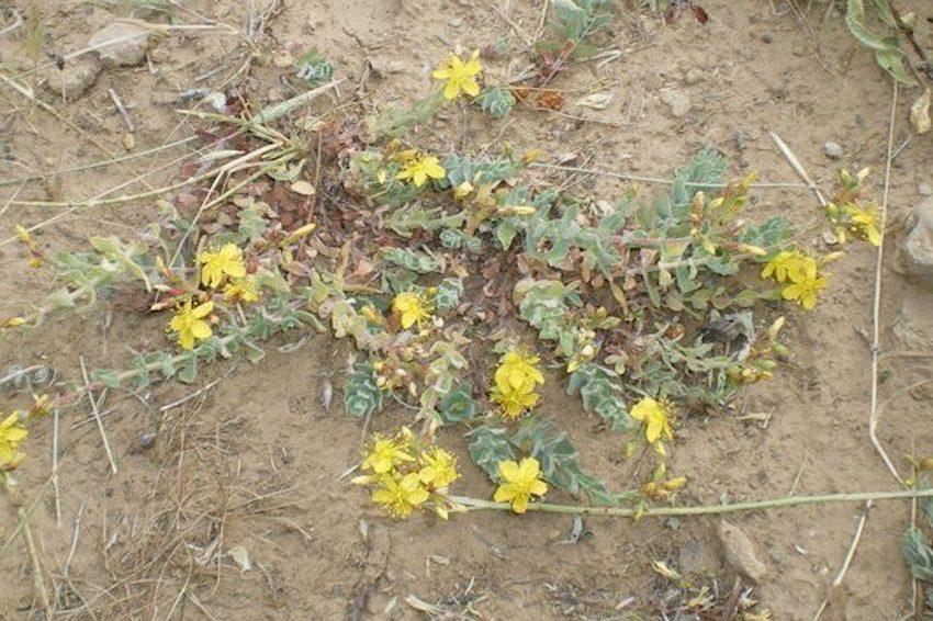 hiv pianta